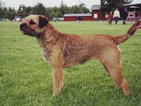 Hoksel Dicha, borderterrier
